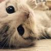 Animal Trend💫のアイコン