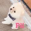 ポメラニアンPiiのアイコン