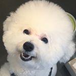 꿍이❤️ - bichon_kkung