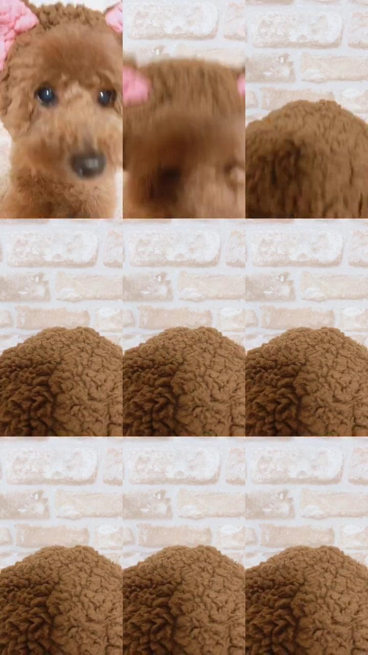 #スローモーション#マルチスクリーン#うちの子デビュー#tiktokオーディション2019#タレント大賞#ペット芸#dogs#minions#dogs#개#comedy#foryou