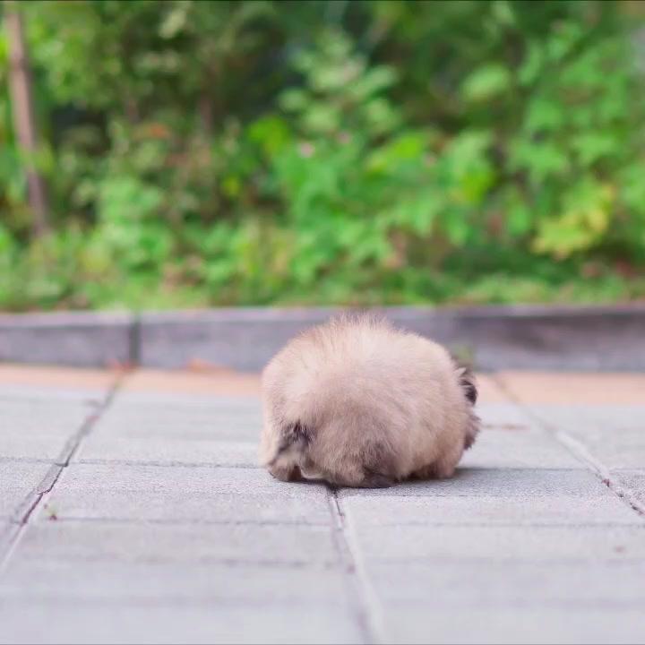 #petbff #petchallenge #petlover #animal #animallover #puppy #puppies
